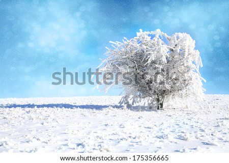 Hawthorn bush showered with snow. Winter landscape after a snowstorm - stock photo