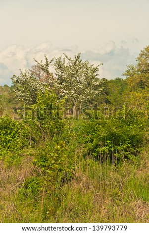 Hawthorn in bloom on Wildlife Island at Forest Park.