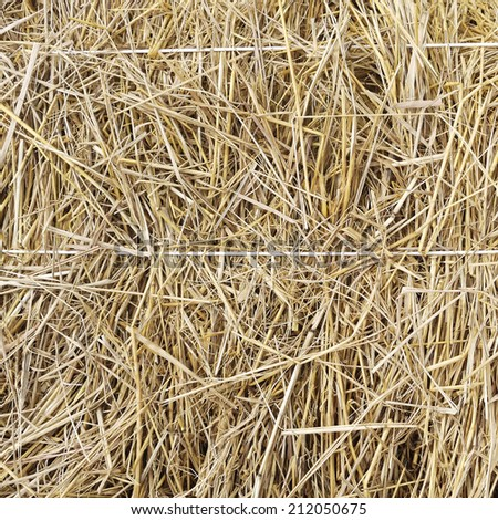 Hay background as a front view of a bale of hay as an agriculture farm and farming symbol of harvest time with dried grass straw as a bundled tied haystack - stock photo