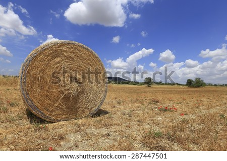 Hay bail harvesting in golden field landscape and blue sky