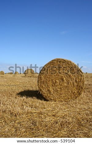 Hay bails - stock photo