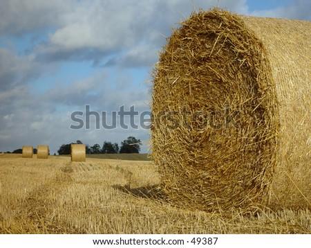 hay bale - stock photo