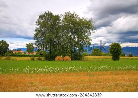 Hay bale field. Umbria. Italy. - stock photo