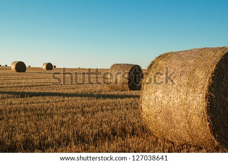 hay bale in the foreground of orange rural field - stock photo