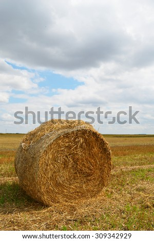 Hay bale on the field after harvest - stock photo