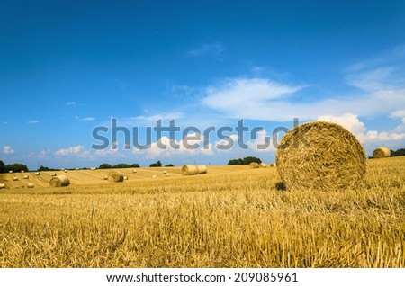 Hay bales in a field under a blue sky  - stock photo