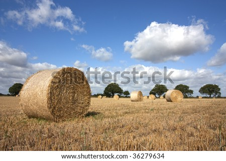 hay bales in summer at harvest time - stock photo