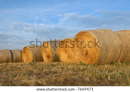 Hay bales in the evening