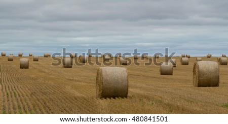 Hay Bales of Summer