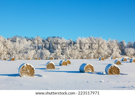 Hay bales on a snowy field - stock photo