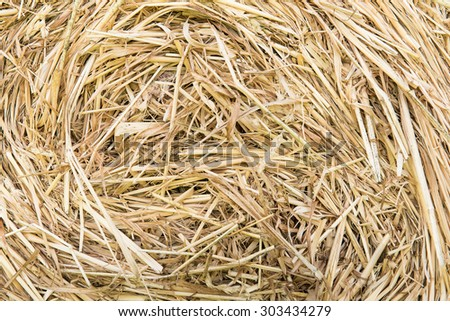 Hay bales on meadow - stock photo