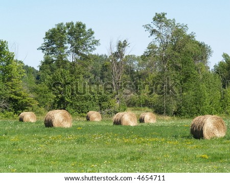 hay bales on rural landscape - stock photo