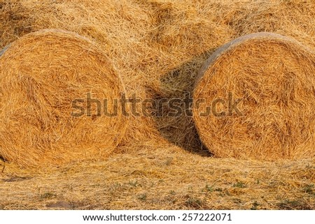 Hay bales on the field after harvest. Hay for the winter. - stock photo
