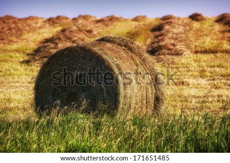 Hay bales on the field after harvest ina soft evening light. - stock photo