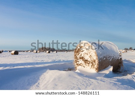 Hay bales on the winter field - stock photo