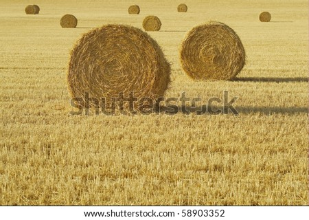 hay ball - stock photo