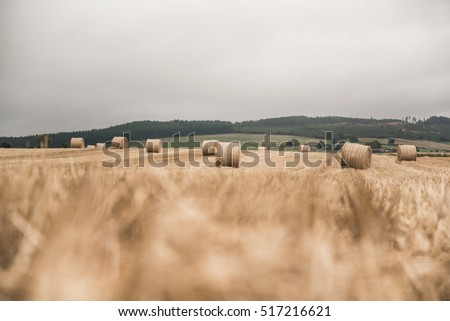 Hay balls on a field - as summer ends and autumn approach a harvest time begin in preparation for cold winter months. Agriculture and farming background. Farmer world
