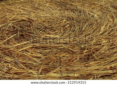 Hay Circular Texture background as an angled view of a circle bale of hay as an agriculture farm and farming symbol of harvest time with dried grass straw as a bundled tied haystack. - stock photo