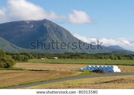 hay field - stock photo