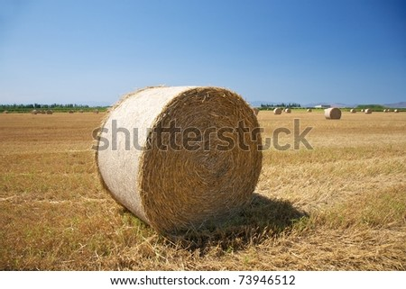 hay fields at the country in Girona Catalunya Spain