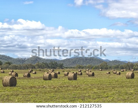 Hay in the fields of Queensland, Australia