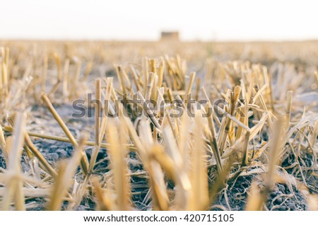 Hay on the field in village in summer time - stock photo