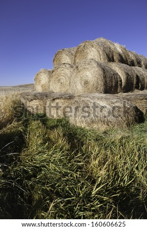 Hay stacked on grass.