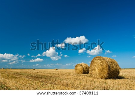 hay stacks in autumn field under blue skies - stock photo
