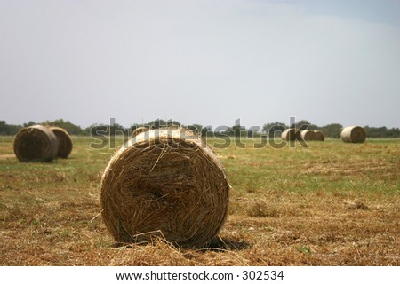 Hay stacks ready to be picked up