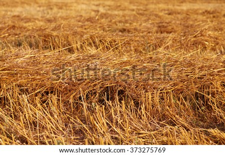 hay straw stack texture on field, agriculture background - stock photo
