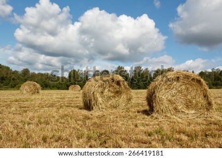 Hayfield and haystack - stock photo