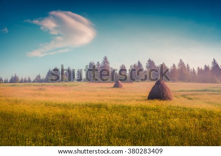 Haymaking in a Carpathian village. Colorful summer sunrise in the misty mountains. Ukraine, Europe. - stock photo