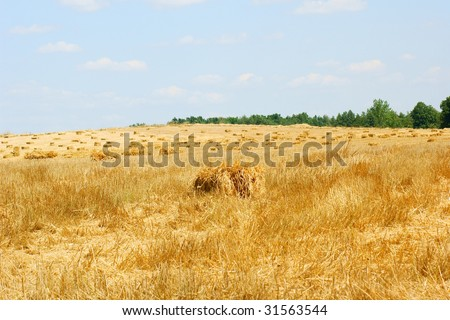 Haystack in a wheat field - harvest - blue sky - stock photo