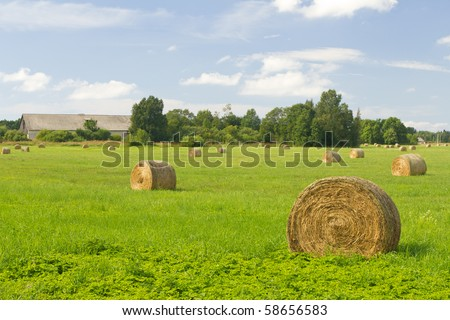 Haystacks in the Estonian countryside - stock photo
