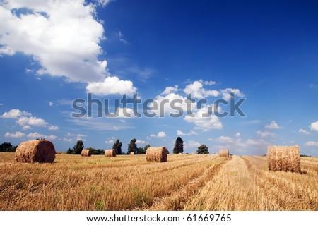 Haystacks in the field. Harvest - stock photo