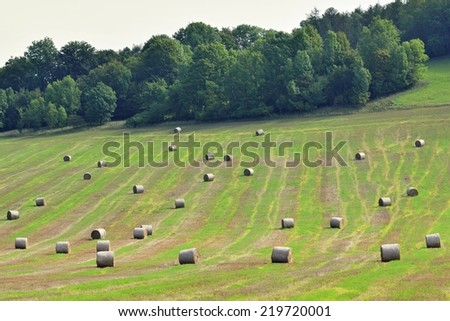 Haystacks on a field in September at the time of harvest. Hay bail harvesting. - stock photo