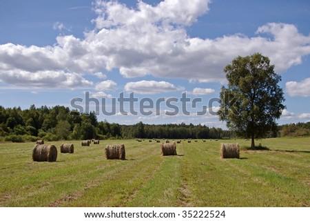 haystacks on field - stock photo