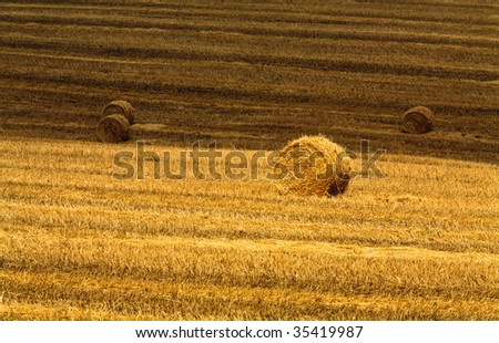 Haystacks on wheat stubble - stock photo