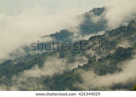 Haze rise from the rain forest in the morning. - stock photo