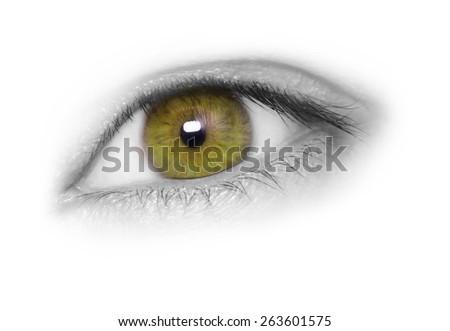Hazel eye isolated on white background - stock photo