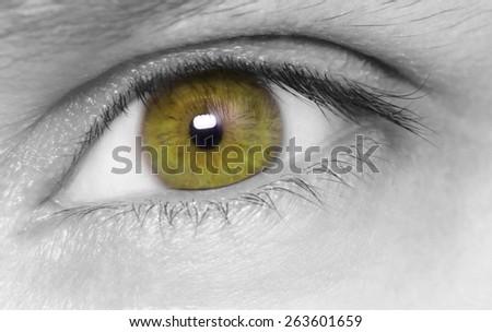 Hazel eye. macro shot. - stock photo