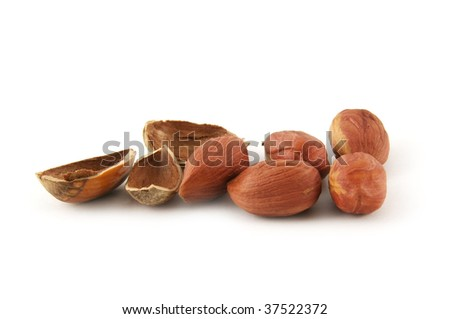 Hazelnut and it shal isolated on white background
