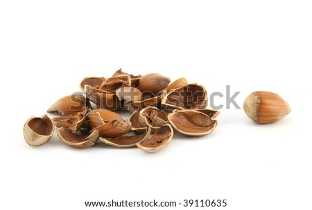 Hazelnut and it shall isolated on white background