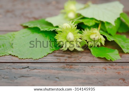 hazelnut on a wooden background outdoors - stock photo