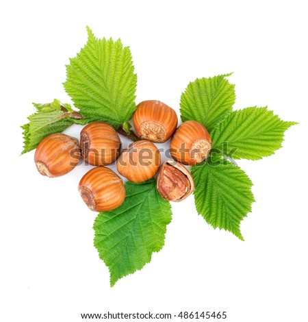 Hazelnut or filbert nuts with leaves on white. Top view.