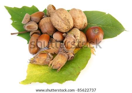 hazelnut, walnut and acorn - isolated on white - stock photo