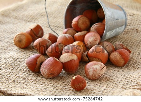 hazelnuts in a bucket on a natural background - stock photo