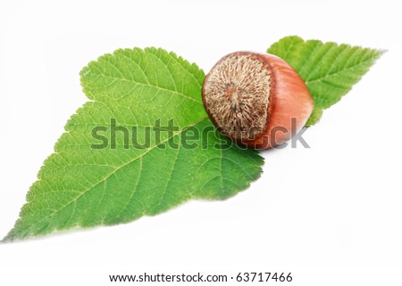 Hazelnuts on a white background - stock photo