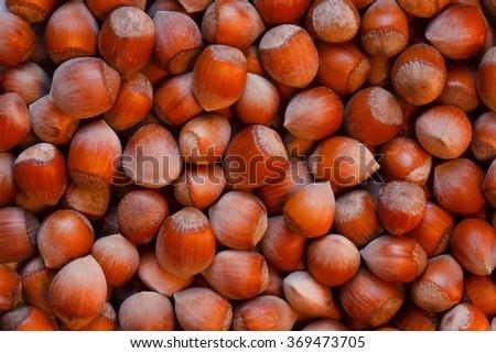 hazelnuts photo background - stock photo