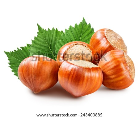 Hazelnuts with leaves isolated on a white background  - stock photo